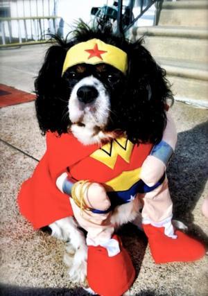 wonder woman dog halloween costume 6934